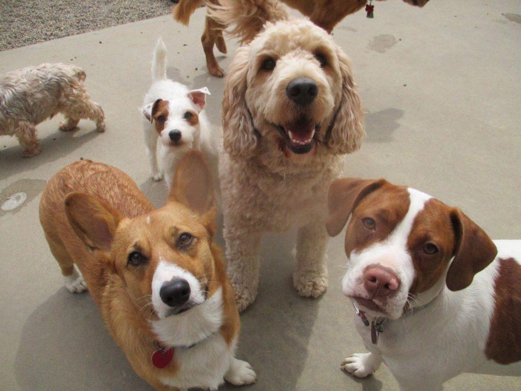 lucky_pawz_dogs